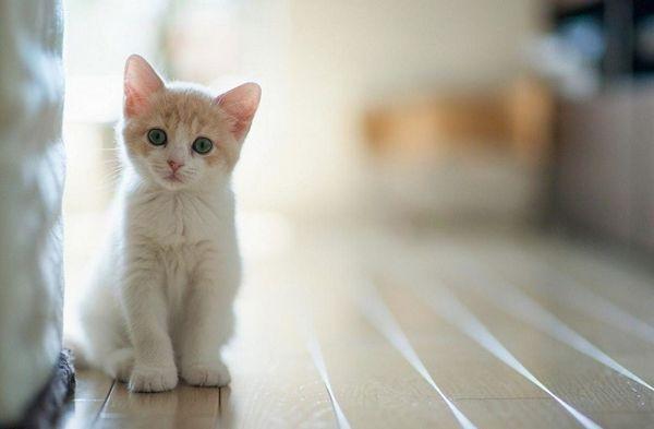 5 Plusov mať mačku doma