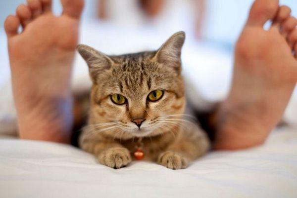 5 Dôvodov, prečo mačka miluje spať pri nohách