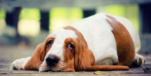 5 причин запору у собаки і що робити в домашніх умовах