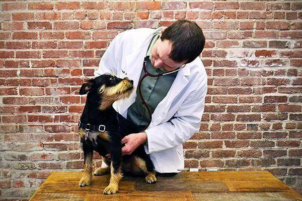 5 причини, чому собака їздить на попі і лікування