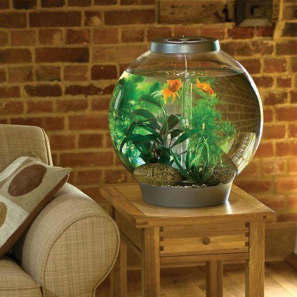 5 Поширених причин помутніння води в акваріумі і як з цим боротися