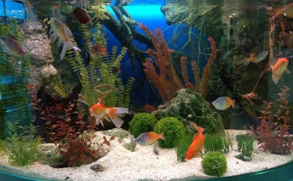 5 Різновидів заднього фону на акваріум і як правильно приклеїти