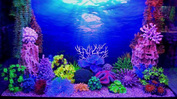 3D-Фон акваріума