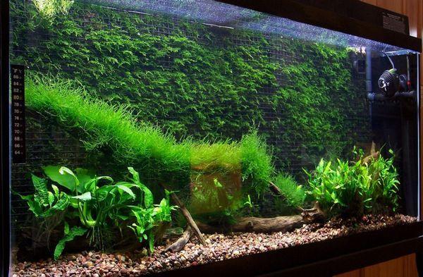 Фон для акваріума з моху