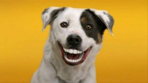 5 Najviac usmievavých plemien psov