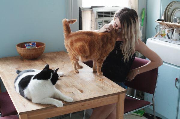 Pomoc majiteľa pri párení mačiek