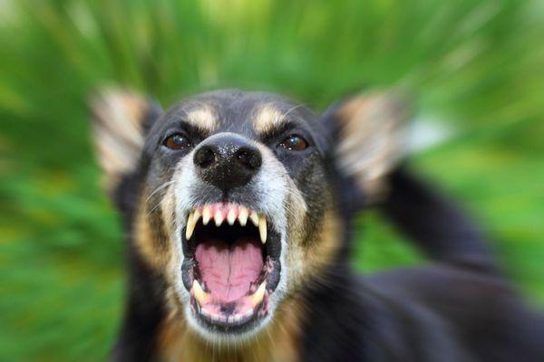 Сказ у собак