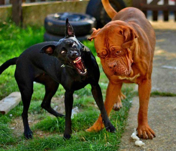 Сказ передається при укусі хворої собаки