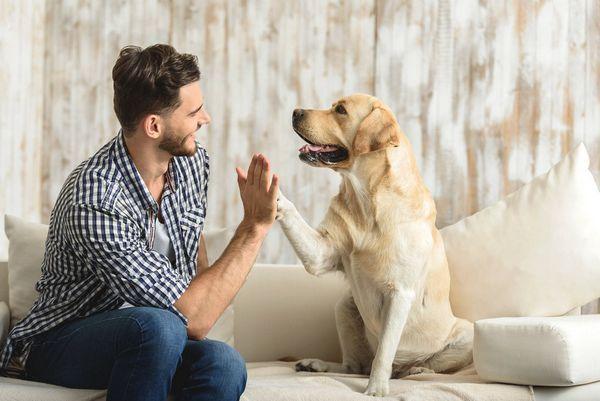 5 Vecí, ktoré môžete urobiť, aby ste svojmu psovi veľmi ublížili