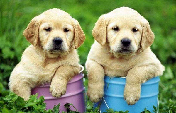5 Видів ектопаразитів у собак - що це таке