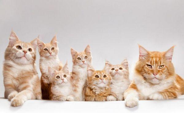 5 видів наповнювачів для котячого туалету: який краще