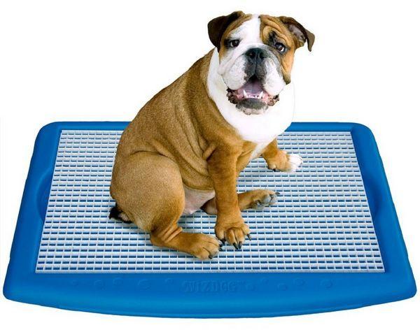 5 druhov toaliet pre psa v byte a ako vycvičiť šteniatko