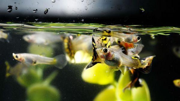 5 druhov živých krmív pre akvarijné ryby doma