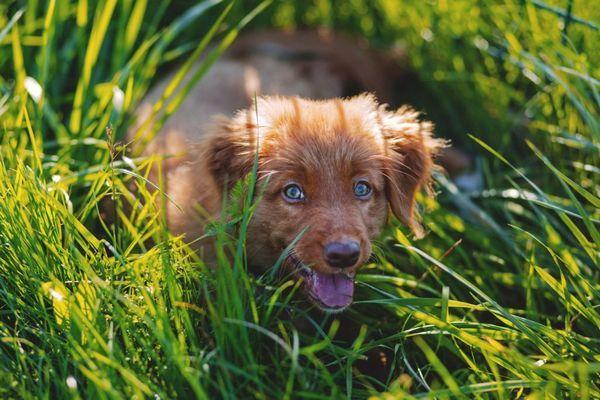 5 Можливих причин, чому собака їсть траву і що робити