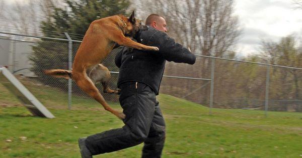 6 Bežných dôvodov pre útoky psov na ľudí a ako sa im vyhnúť