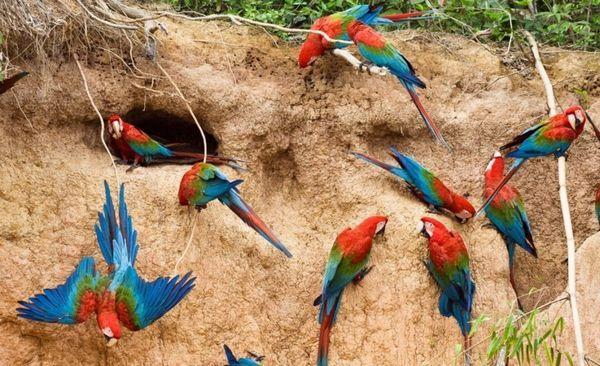 Macaws sa hrnú vtáky, ale zároveň si vyberajú pár pre seba a na mnoho rokov