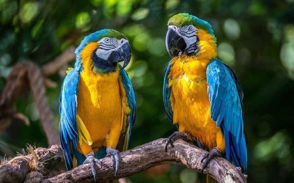 V dôsledku nelegálneho predaja vtákov väčšina papagájov počas prepravy zahynie