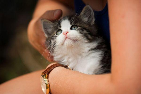 Глистогінні для кішок
