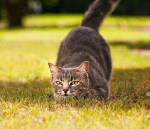 7 Spôsobov, ako odstaviť mačku od trhania tapiet a škrabania nábytku