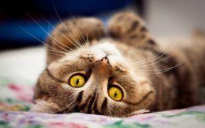 7 Spôsobov, ako upokojiť mačku počas horúčavy
