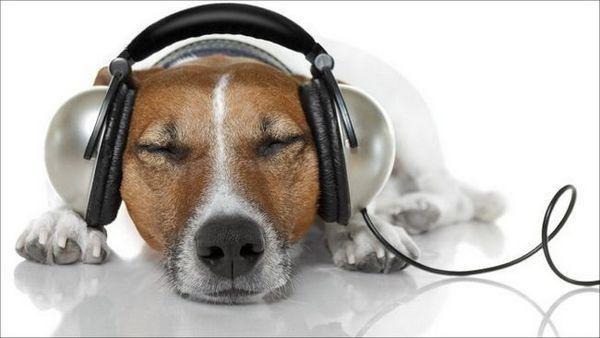 8 Zábavných faktov o počutí psa