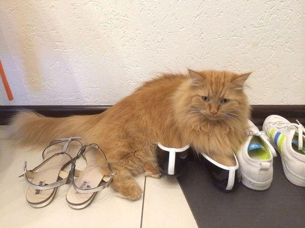 Чим обробити місця де паскудить кішка