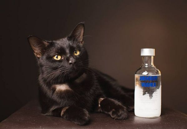 Кішки не переносять запах спирту і алкогольних продуктів