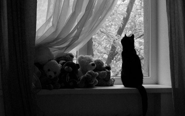 Кішки можуть подавати голос при нестачі уваги