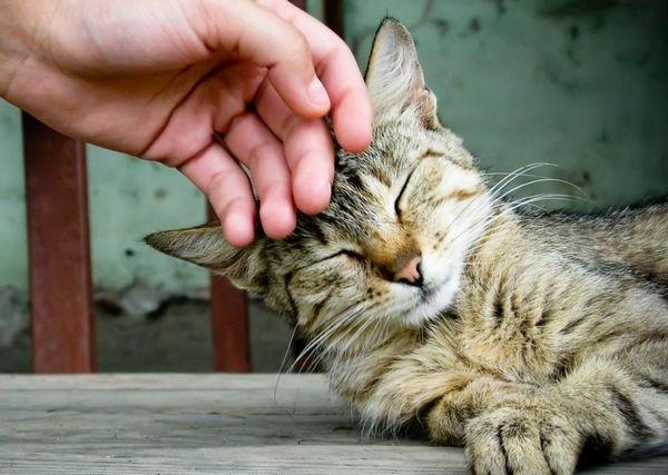 Грубе ставлення до тварин неприпустимо