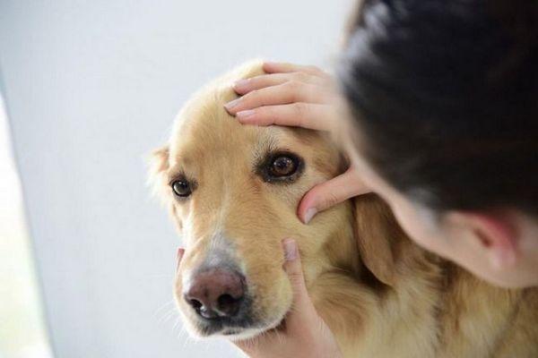 8 Dôvodov, prečo psy mžourajú očami