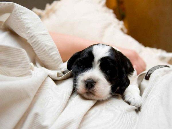 8 видів вакцини Нобівак і інструкція із застосування для собак