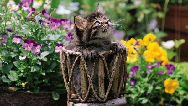 9 Kvetiny a rastliny mačky sa nepáčia