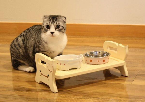 Кошеня може відмовлятися від корму якщо миска брудна або погано пахне