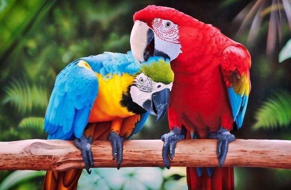 Найбільші папуги в світі