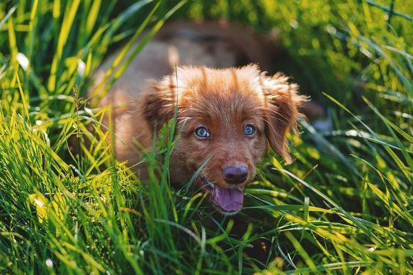 Щеня лежить в траві