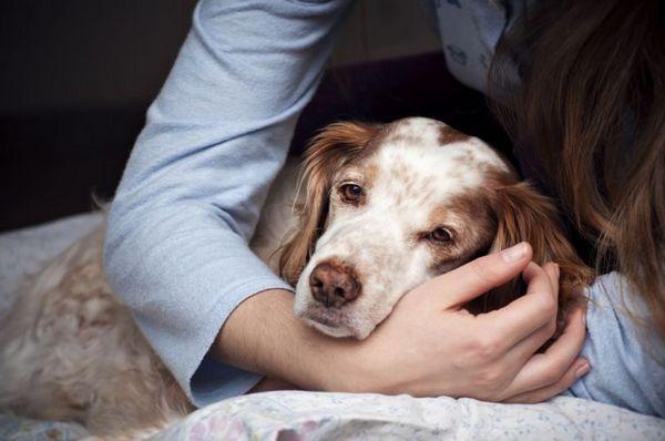 Собака сонлива і млява
