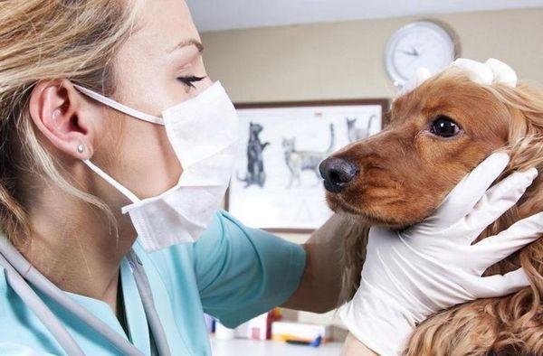 Ветеринар оглядає собаку