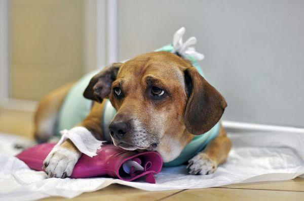 Собака у ветеринарній клініці