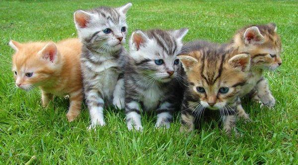 Кошенята на траві