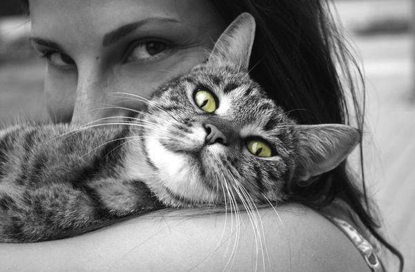 Кішка на плечі у господині