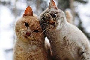 Кішки без бліх