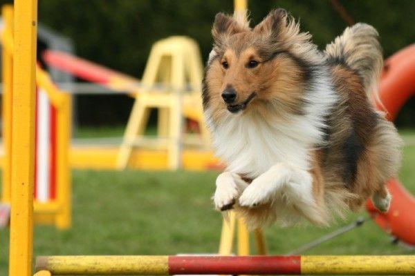Agility - šport pre aktívnych psov