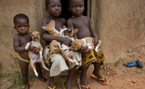 Басенджи в Африці