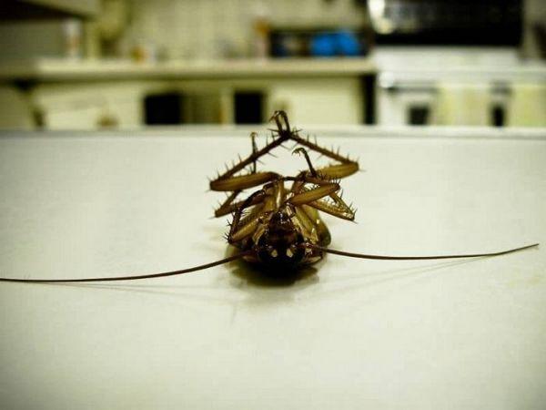 Знищення шкідливих комах