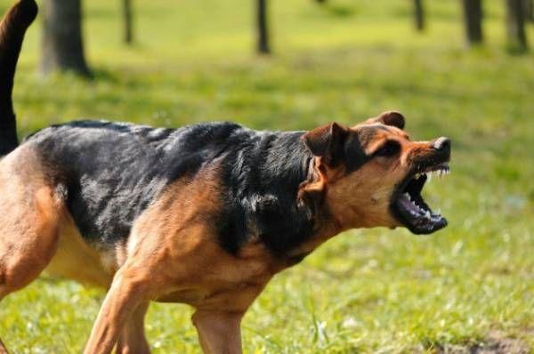 Agresia u psov: pochopenie príčin a nápravných opatrení
