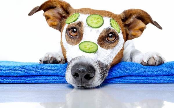 Akné u psov - príčina a prevencia