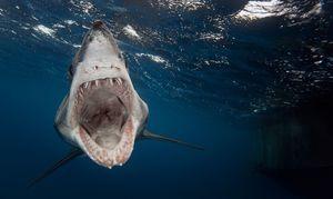 Žraloky sú nebezpečné druhy