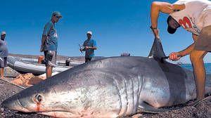 Rybári chytili mako