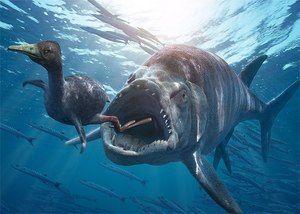 Opis rozdielov a podobností medzi kostnatými rybami a žralokmi