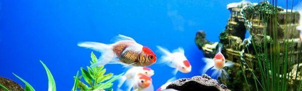 Diy akvárium doma